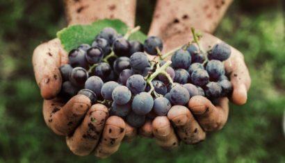 raw-wines